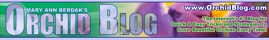 OrchildBlog.com
